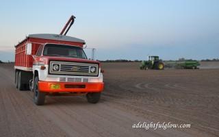 Wheat Drilling 2015